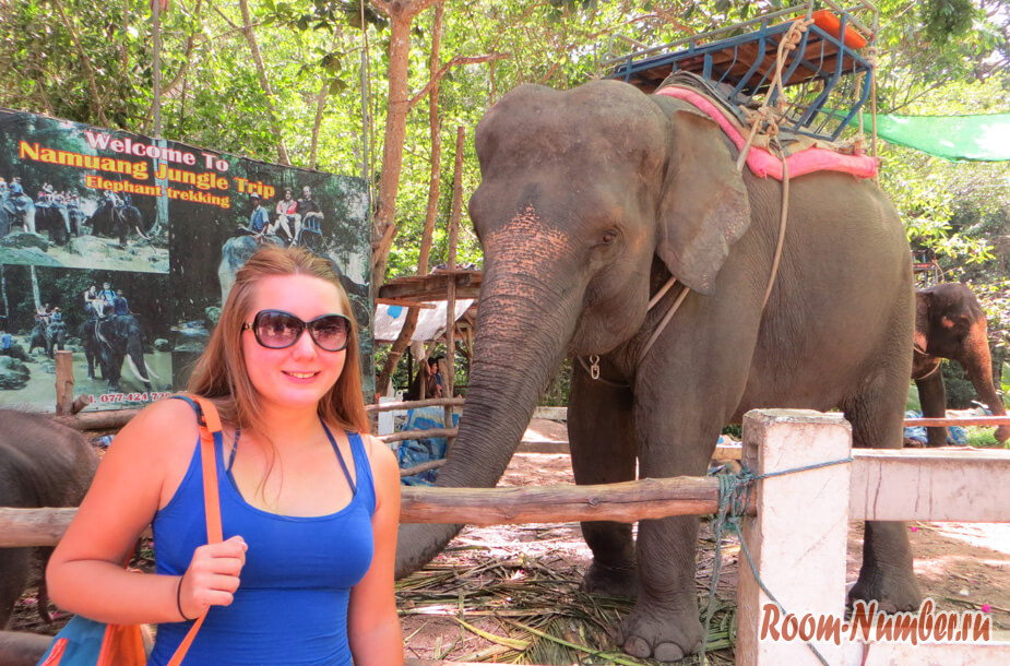 slonovia-ferma-na-samui-6