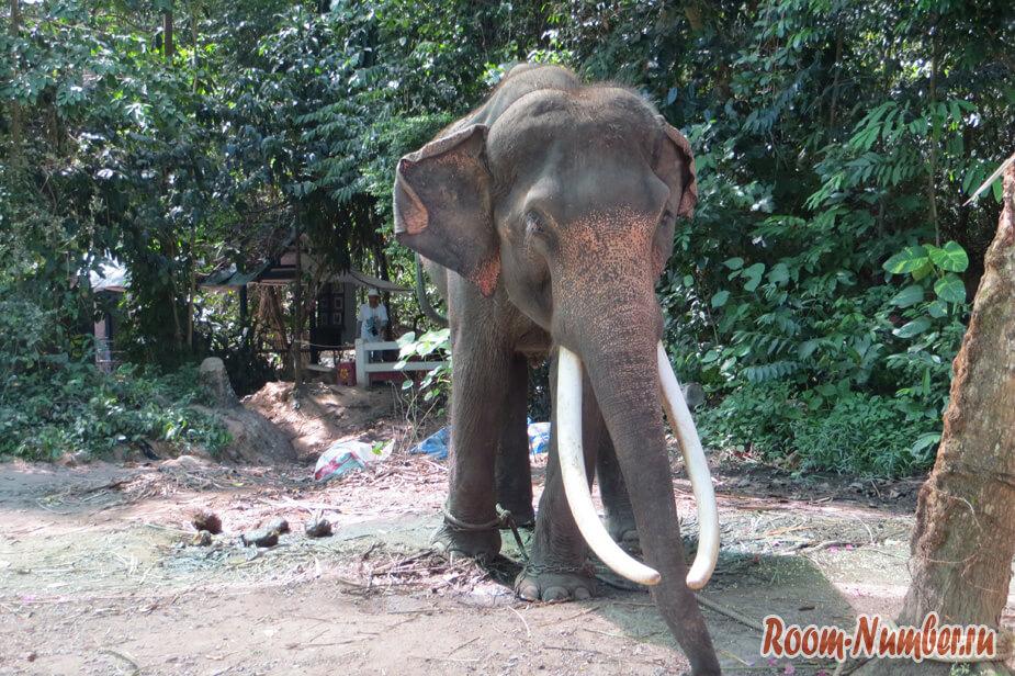 slonovia-ferma-na-samui-7