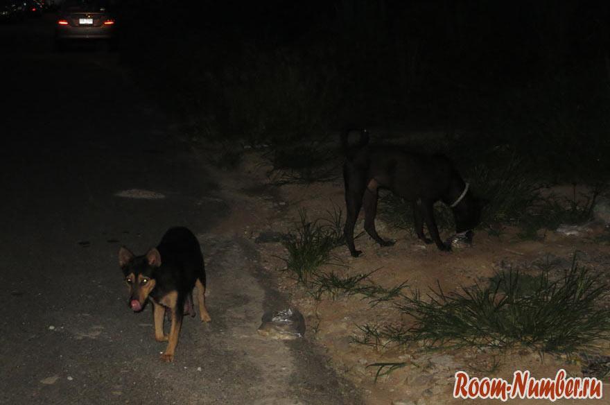dogs-amazon