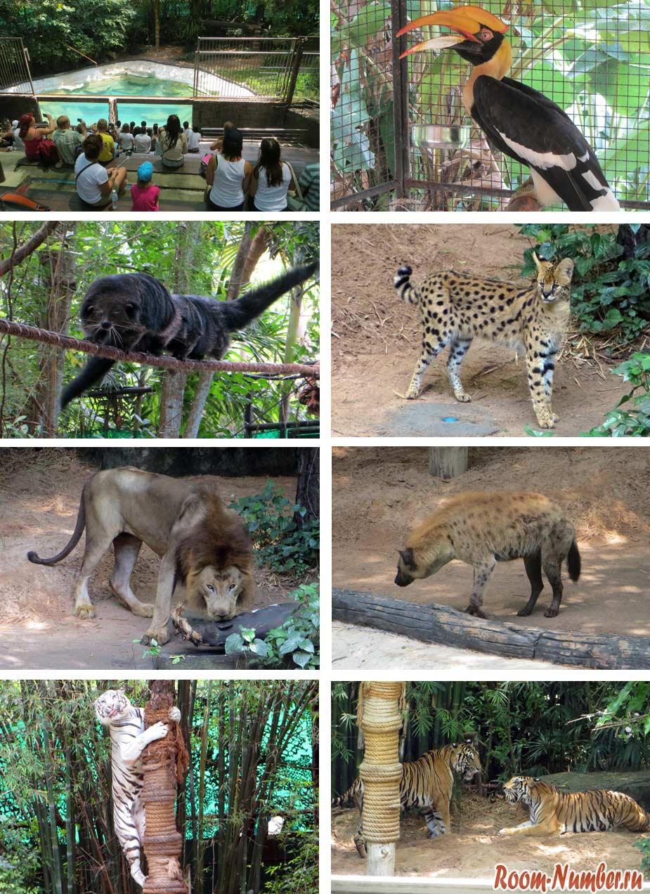 шоу в зоопарке кхао кхео паттайя
