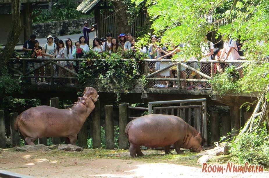 kontaktnyi-zoopark-v-pattaye-kxao-kxeo-10
