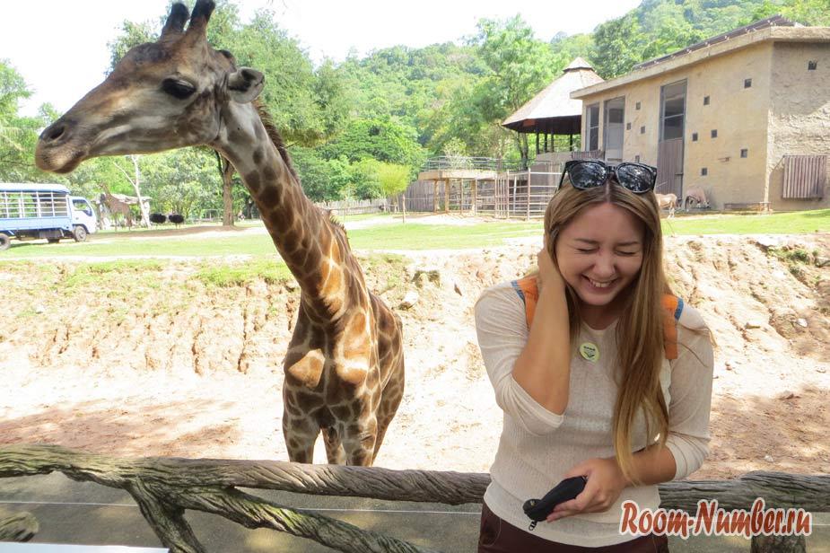 kontaktnyi-zoopark-v-pattaye-kxao-kxeo-13