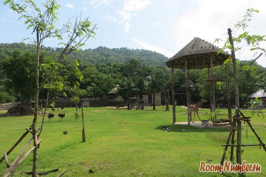 Экскурсия в зоопарк Кхао Кхео Паттайя