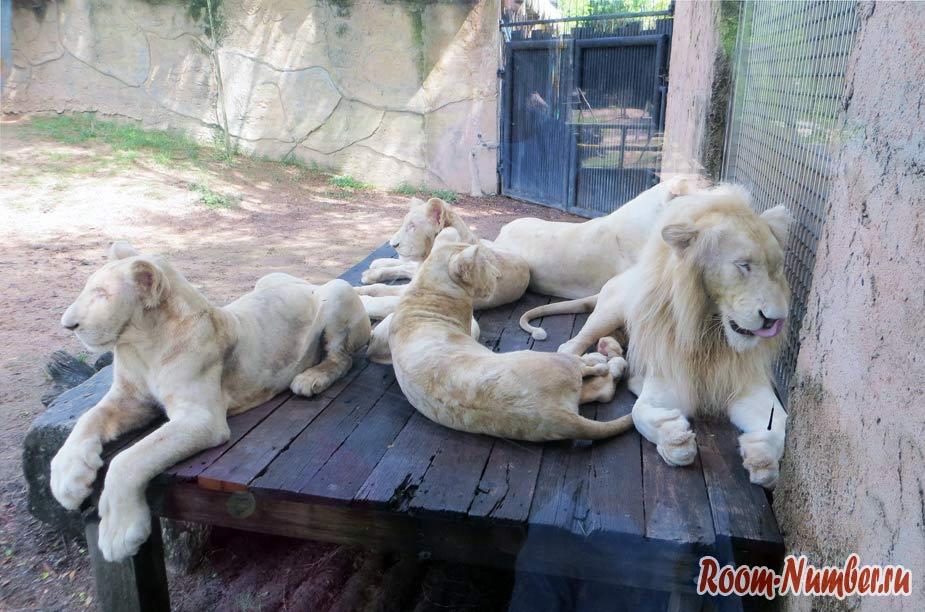 kontaktnyi-zoopark-v-pattaye-kxao-kxeo-15