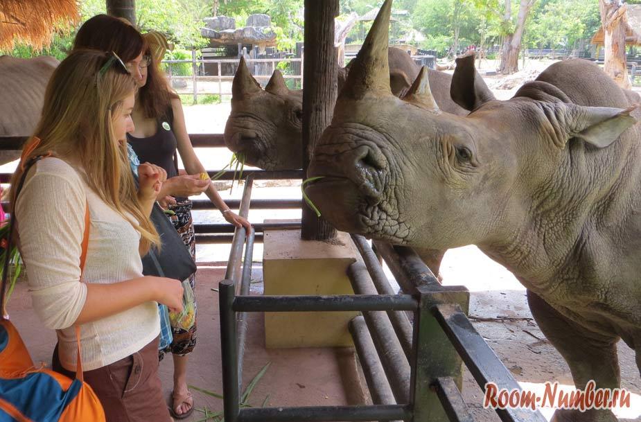 kontaktnyi-zoopark-v-pattaye-kxao-kxeo-16