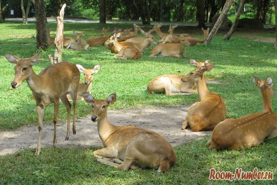 kontaktnyi-zoopark-v-pattaye-kxao-kxeo-2