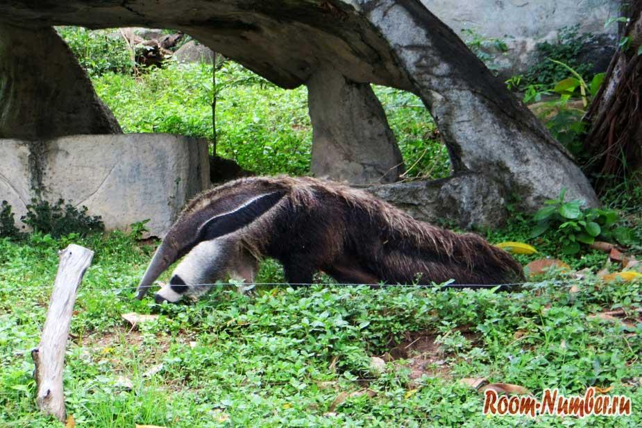 kontaktnyi-zoopark-v-pattaye-kxao-kxeo-23