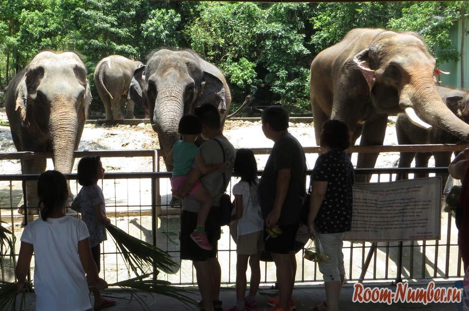 слоны в зоопарке кхао кхео