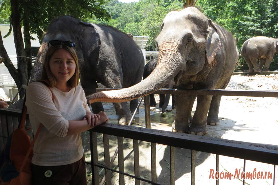 Khao Kheo elephant