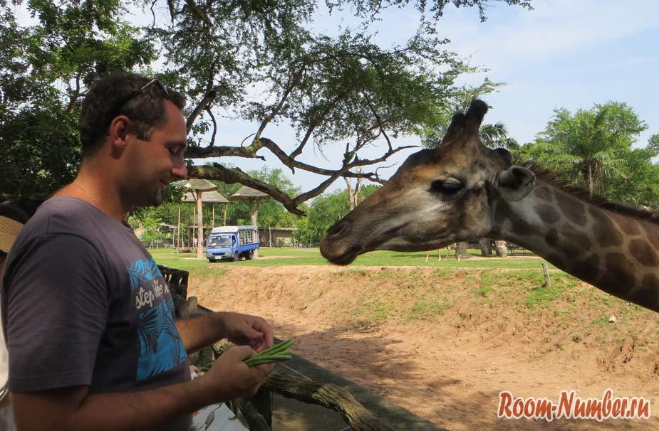 kontaktnyi-zoopark-v-pattaye-kxao-kxeo-28