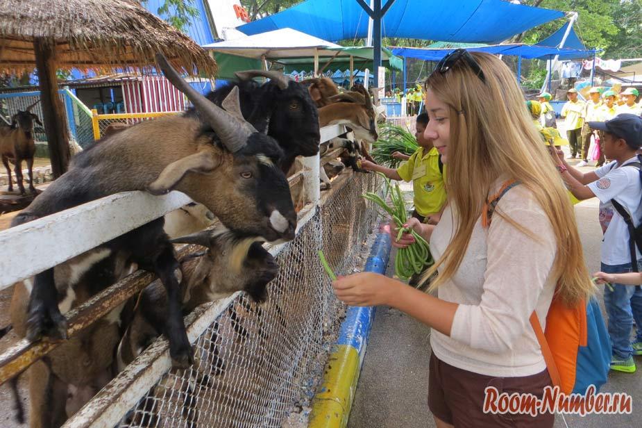 kontaktnyi-zoopark-v-pattaye-kxao-kxeo-7