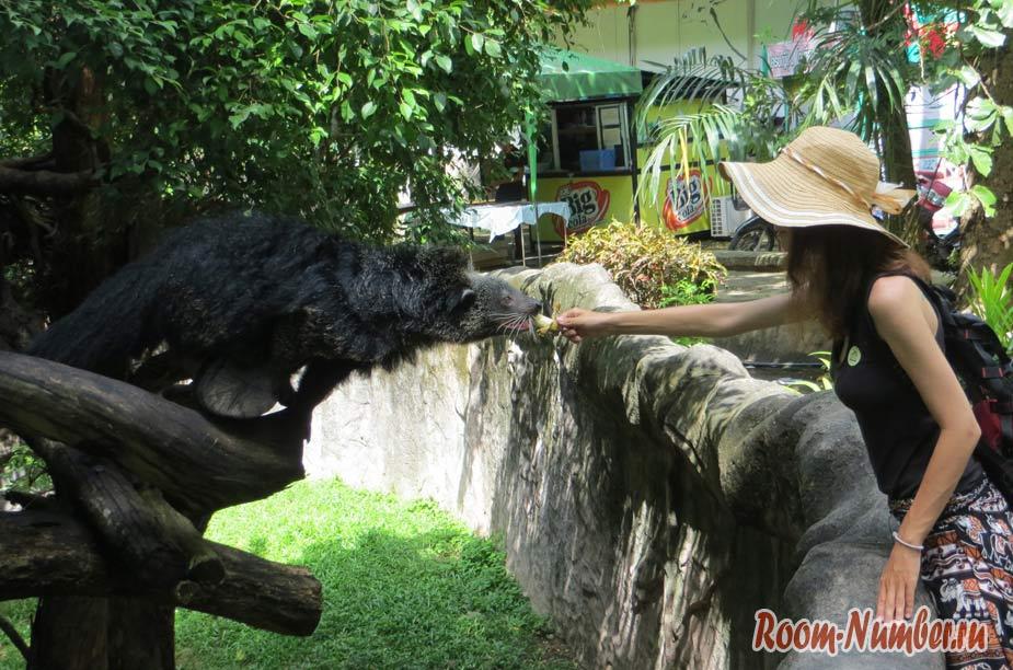 kontaktnyi-zoopark-v-pattaye-kxao-kxeo-9