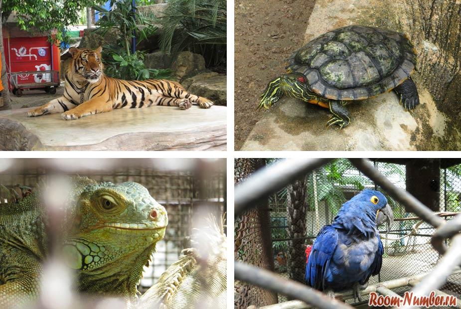 Мини зоопарк в саду нонг нуч паттайя