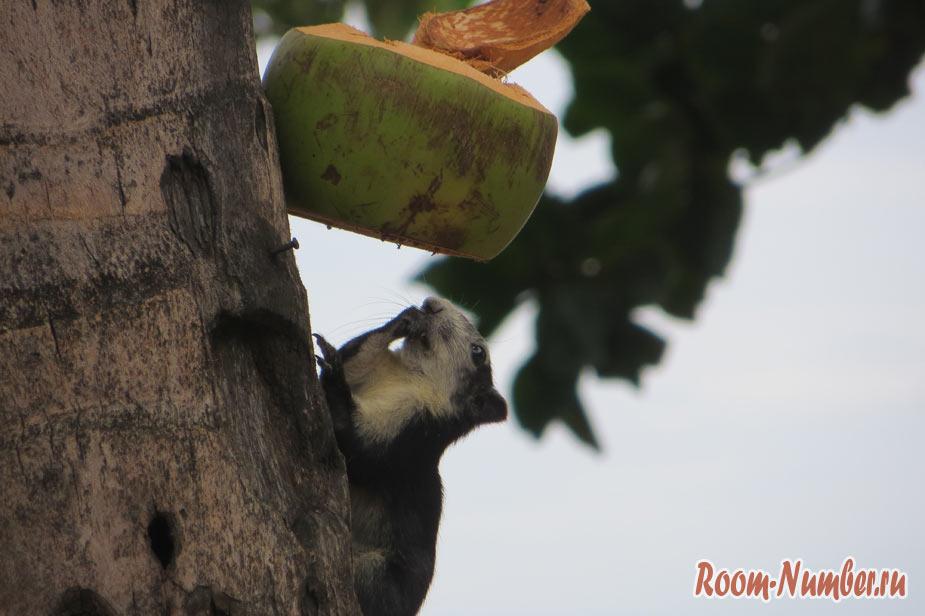 белки едят кокосы на донг тан бич птт