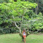 botanicheskiy-sad-na-penange-21