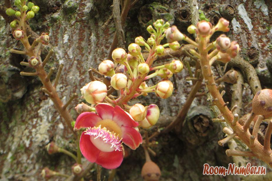 botanicheskiy-sad-na-penange-3