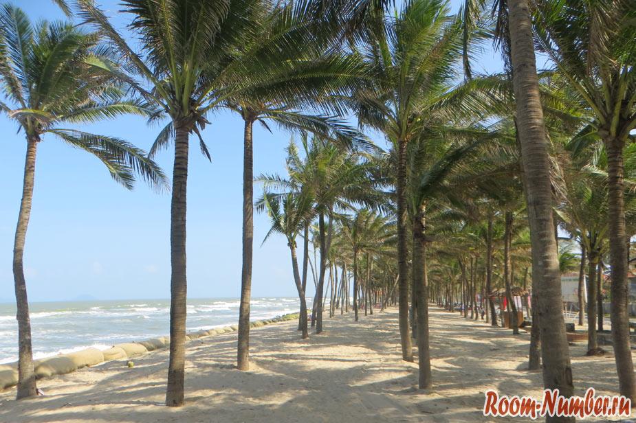 пальмовая роща пляж хой ан