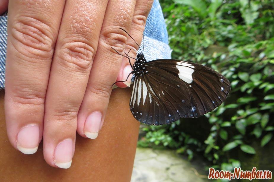 KL-Butterfly-Park-01