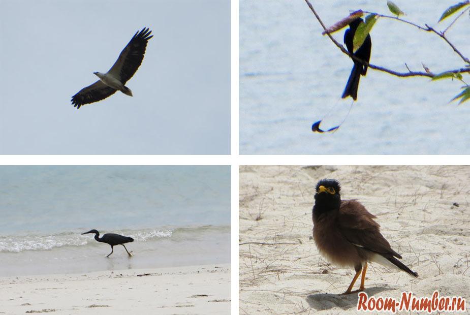 птицы пангана