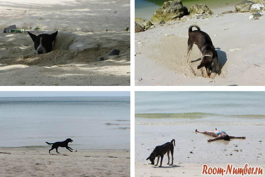 собаки на пангане