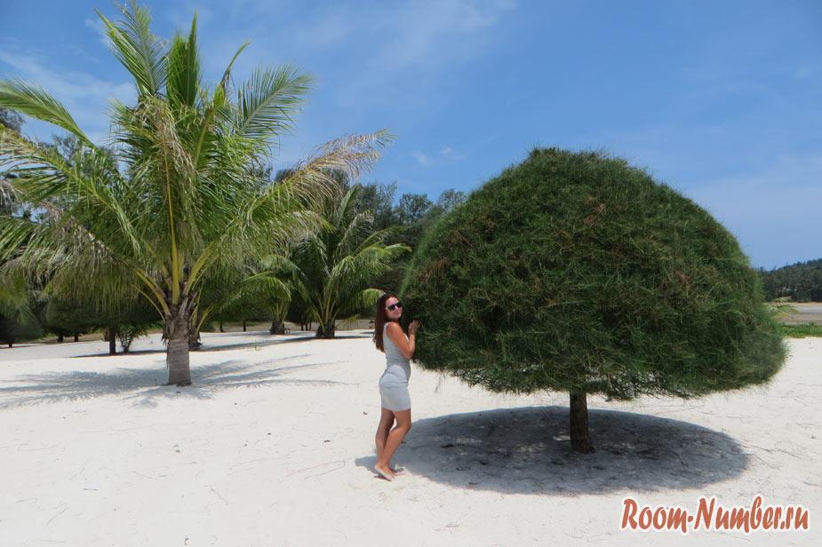 Пляж Малибу, Панган. Вы приглашаетесь на пляж с причудливыми деревьями и белоснежным песком