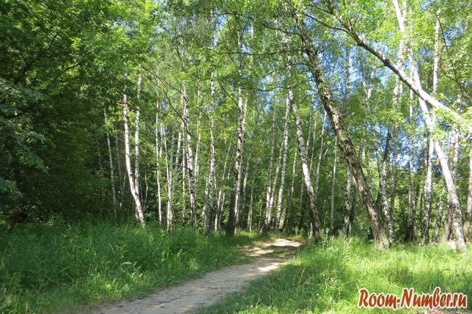 Битцевский лес. Большой парк в Москве для прогулок, спорта и отдыха на природе
