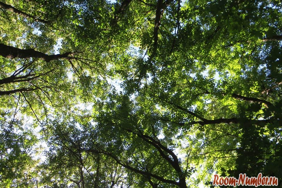 верхушки деревьев на фоне неба
