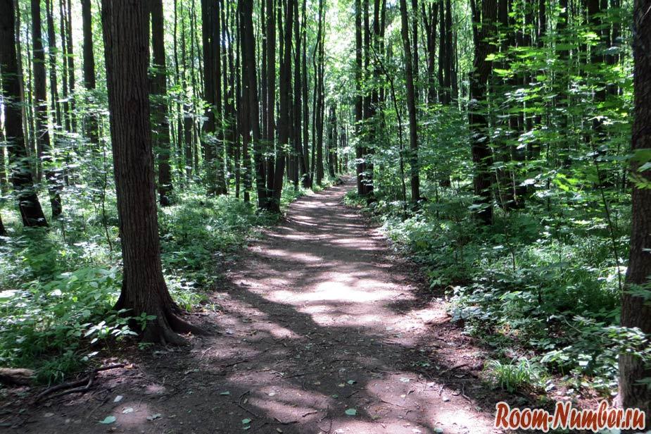широкая тропа через лес