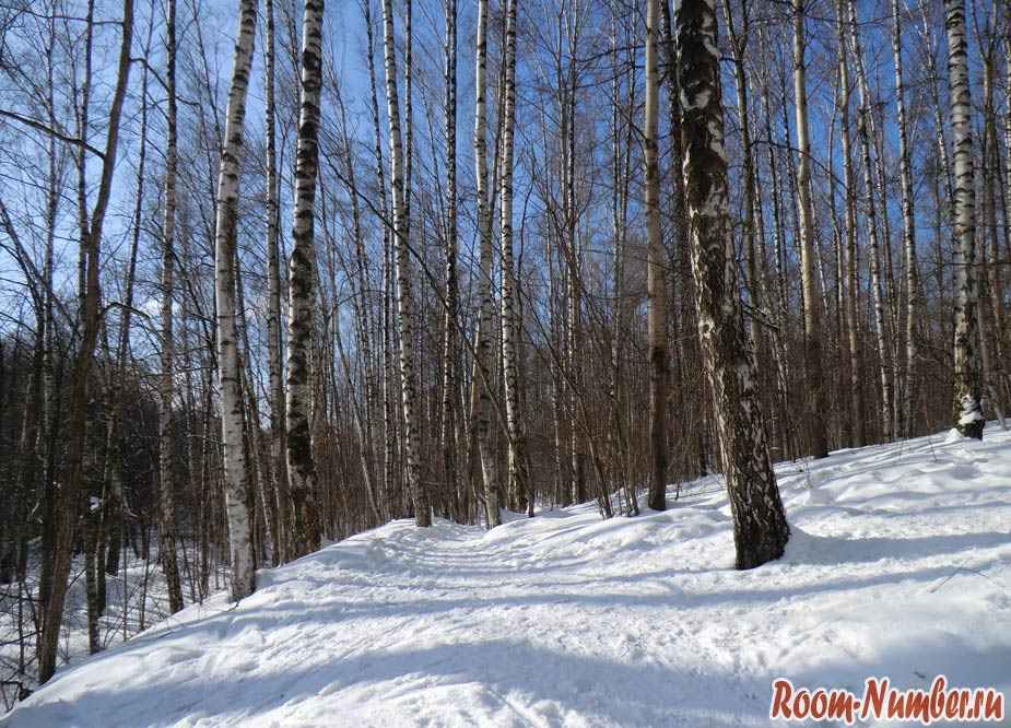 ручей зимой в лесу