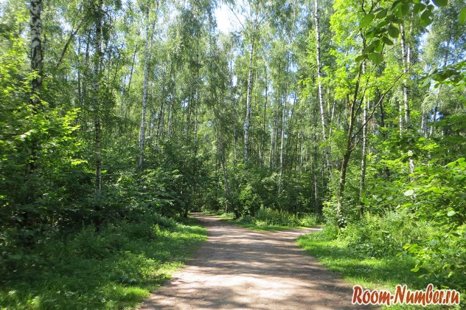 дороги для прогулок по лесу