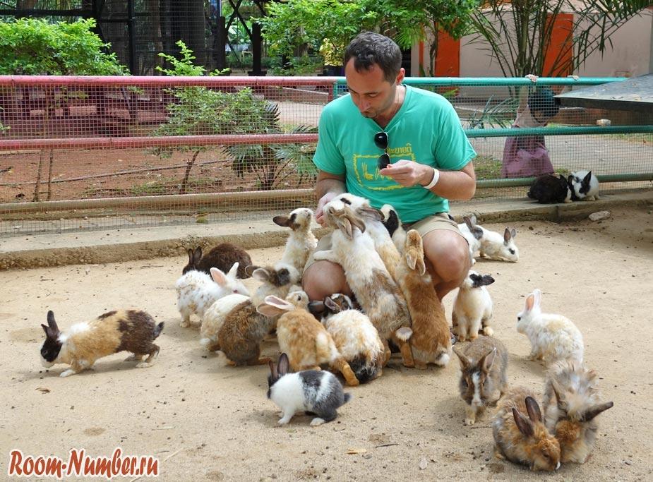 Зоопарк в Мелаке (Melaka Zoo) и кормление кроликов. Это место не оставит вас равнодушным