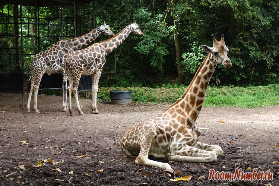 zoopark-v-melakke-11