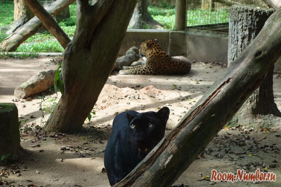 zoopark-v-melakke-14