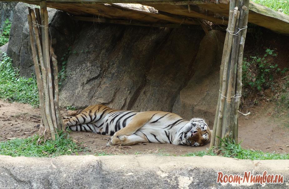 zoopark-v-melakke-15