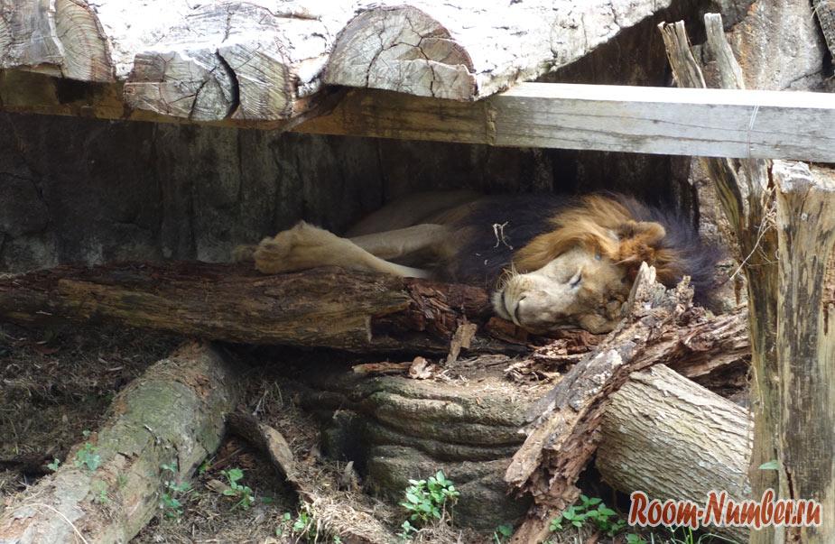 zoopark-v-melakke-16