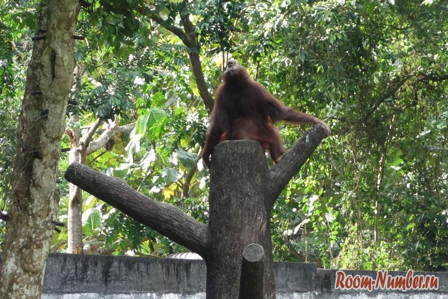 zoopark-v-melakke-19