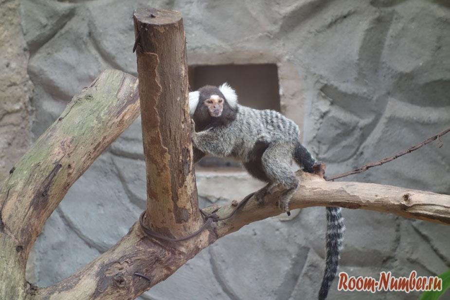 zoopark-v-melakke-2
