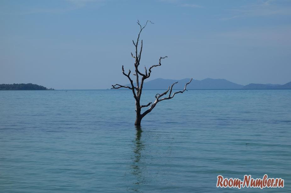 plazh-cinamon-na-ko-make-8