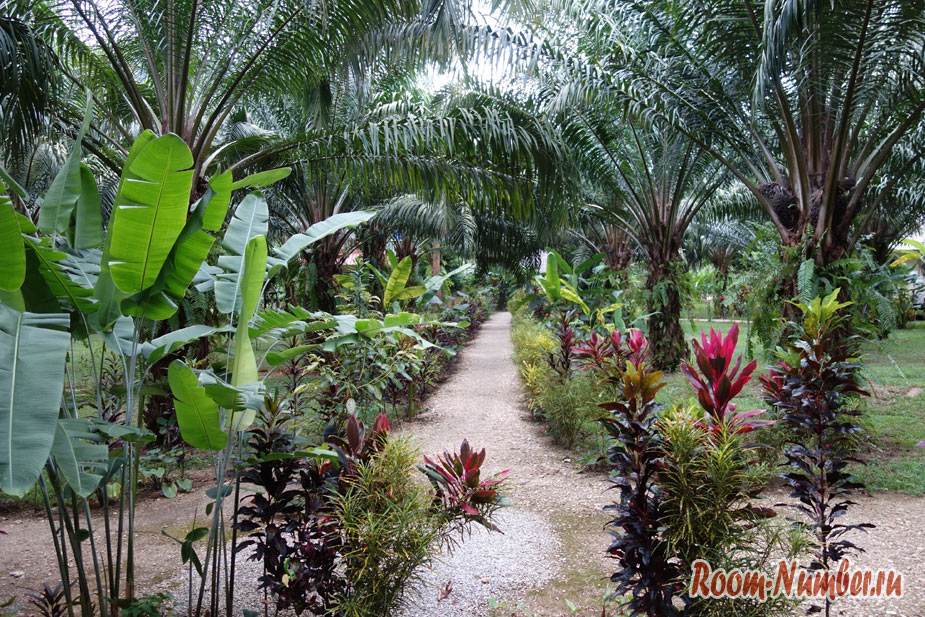 orel-v-khao-soke-palm-garden-resort-6