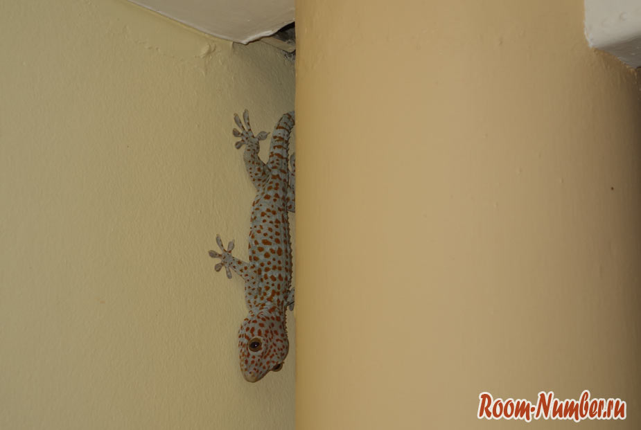thai-life-guesthouse-1