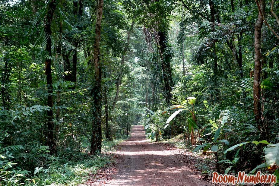 Водопад Huang Num Keaw и 500-летние деревья на Ко Куде