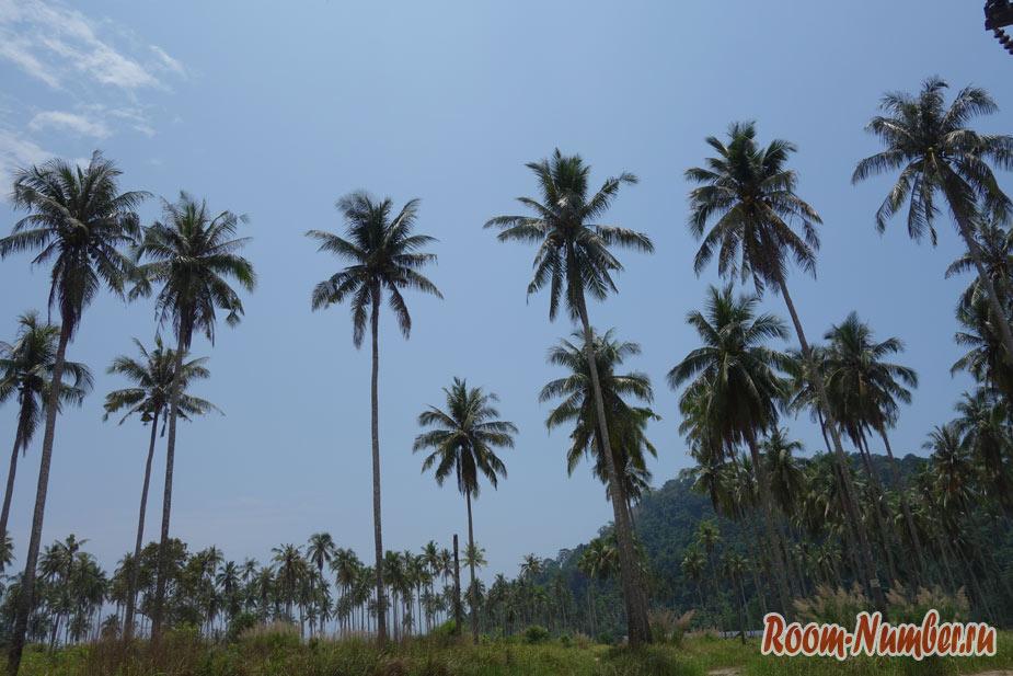 Пляж Ао Прао Ко Куд. Пальмы, пальмы и еще раз пальмы!