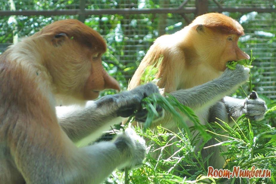 Зоопарк в Кота Кинабалу Lok Kawi Wildlife Park. Там, где носачи и орангутаны