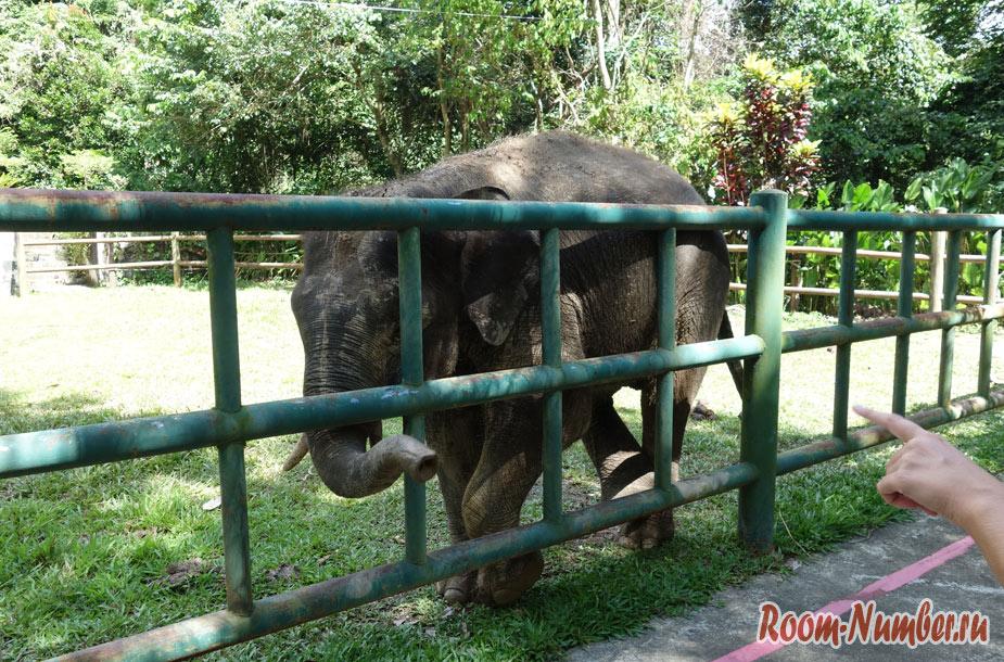 zoopark-lok-kawi-v-kota-kinabalu-1