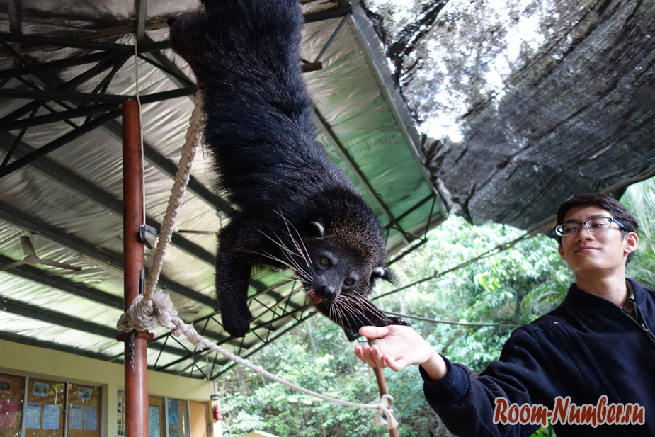 zoopark-lok-kawi-v-kota-kinabalu-10