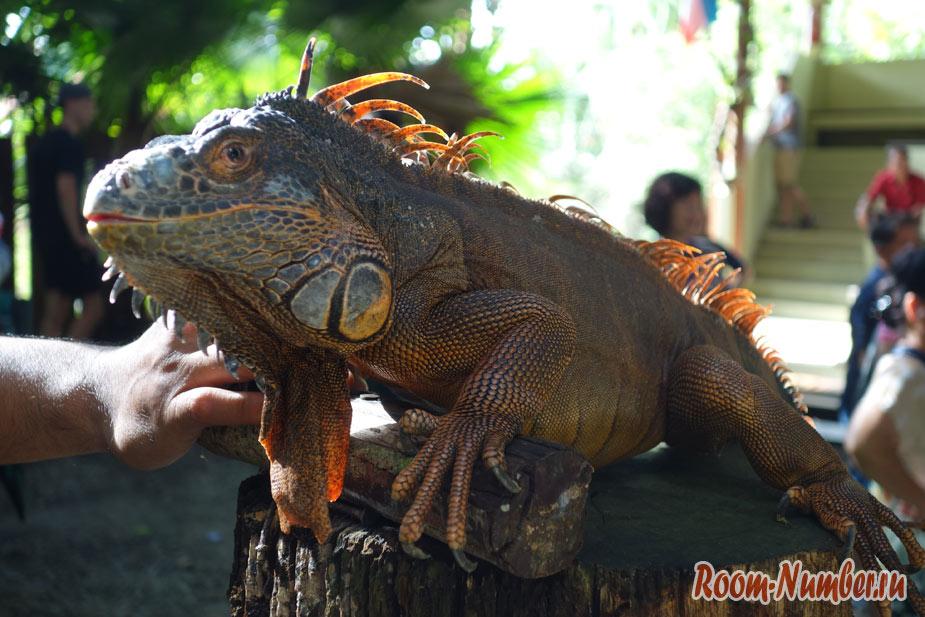 zoopark-lok-kawi-v-kota-kinabalu-15