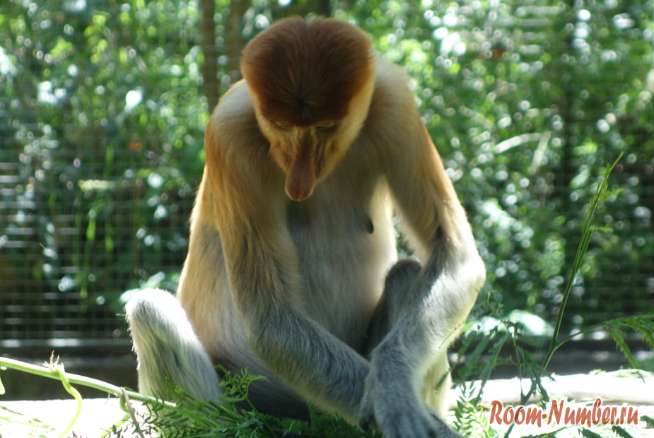 zoopark-lok-kawi-v-kota-kinabalu-22