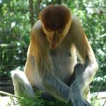 zoopark-lok-kawi-v-kota-kinabalu-23