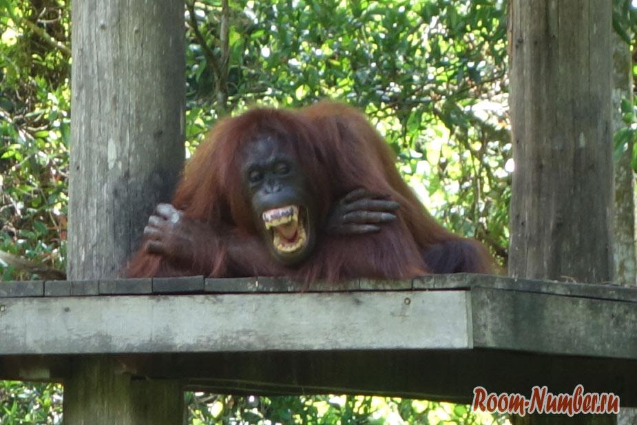 zoopark-lok-kawi-v-kota-kinabalu-4