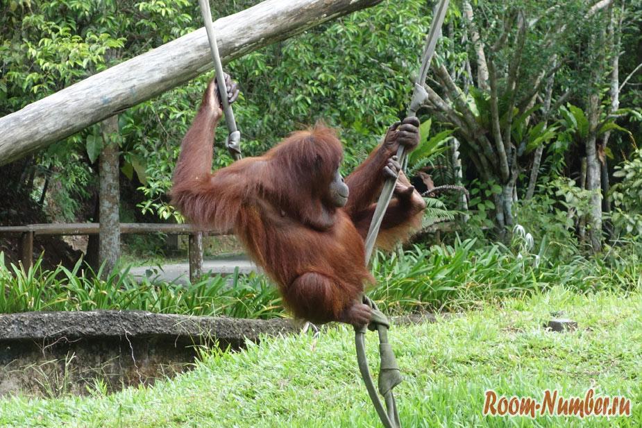 zoopark-lok-kawi-v-kota-kinabalu-5